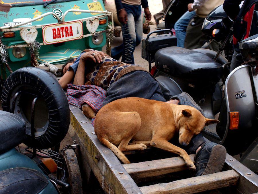 Hombre y perro en India