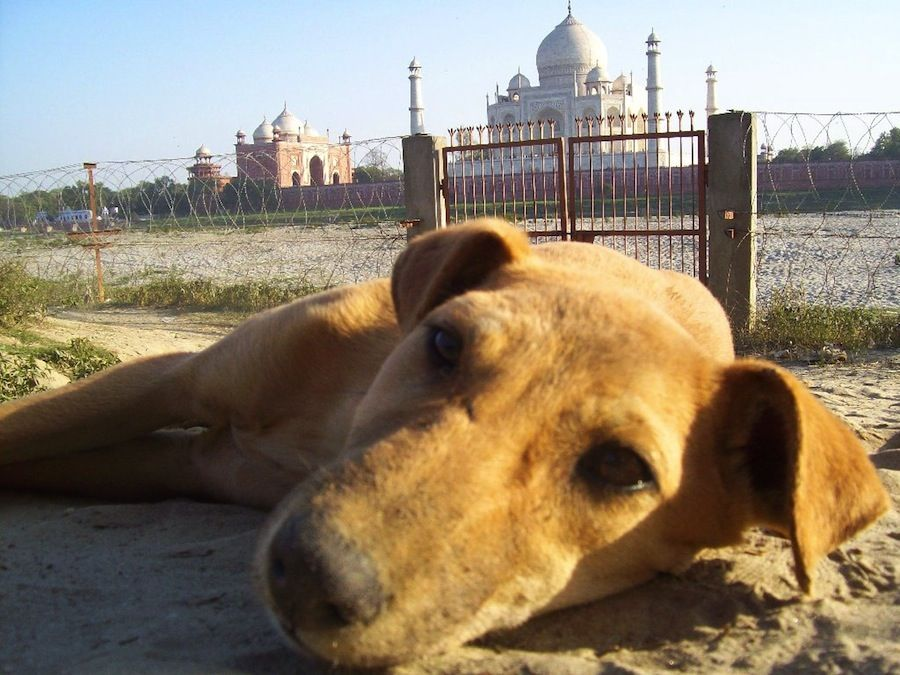 Puesta de sol Taj Mahal