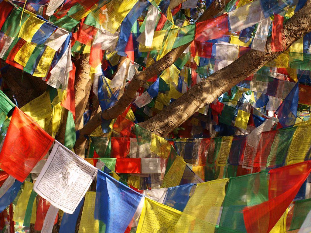 Lumbini budismo oracion nepal