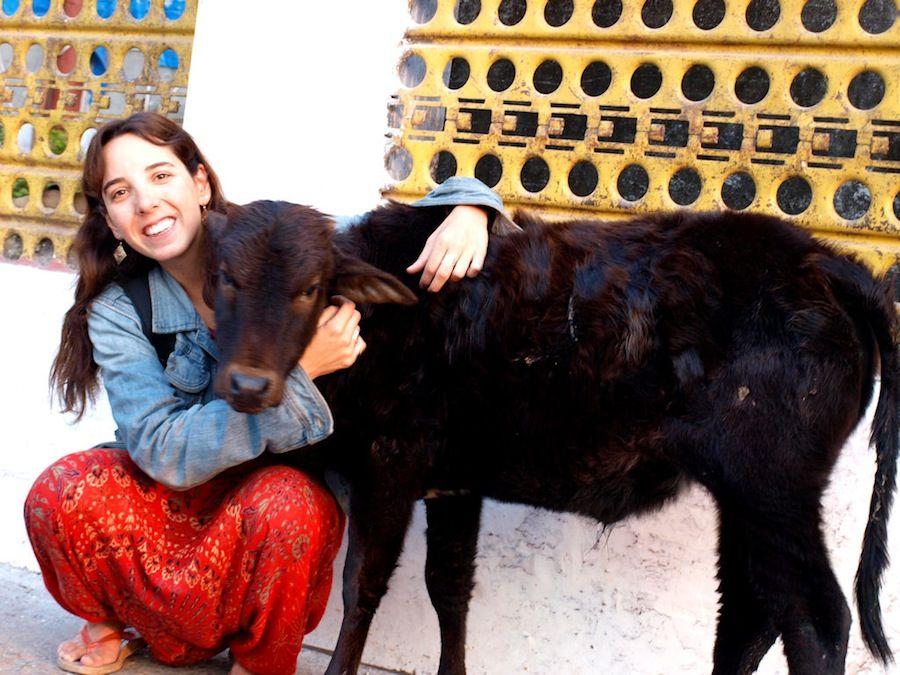Vacas en India, viaje a India