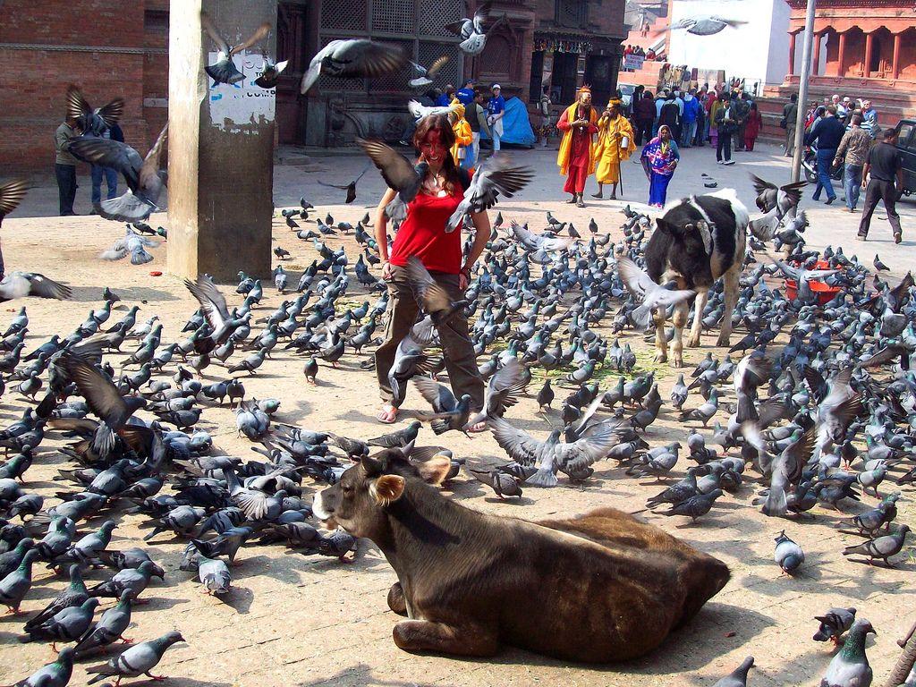Palomas en Durbar Square
