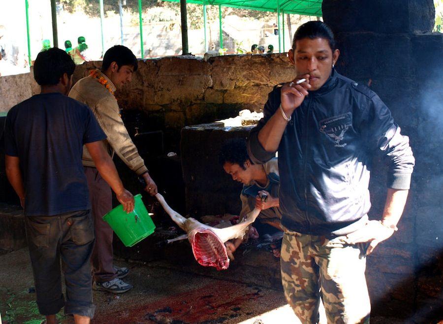 Que hacer en Nepal, que ver, sacrificios