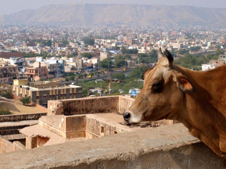 Jaipur, que ver, ciudad rosa, rajasthan, India, viaje