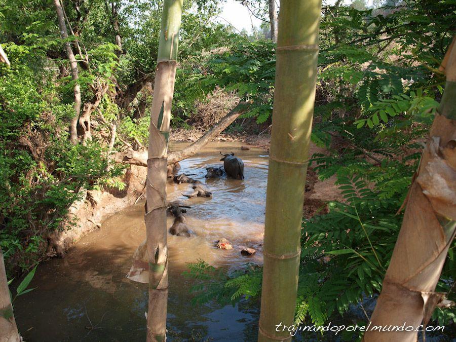 Myanmar, Shan State, paisajes, trekking, animales
