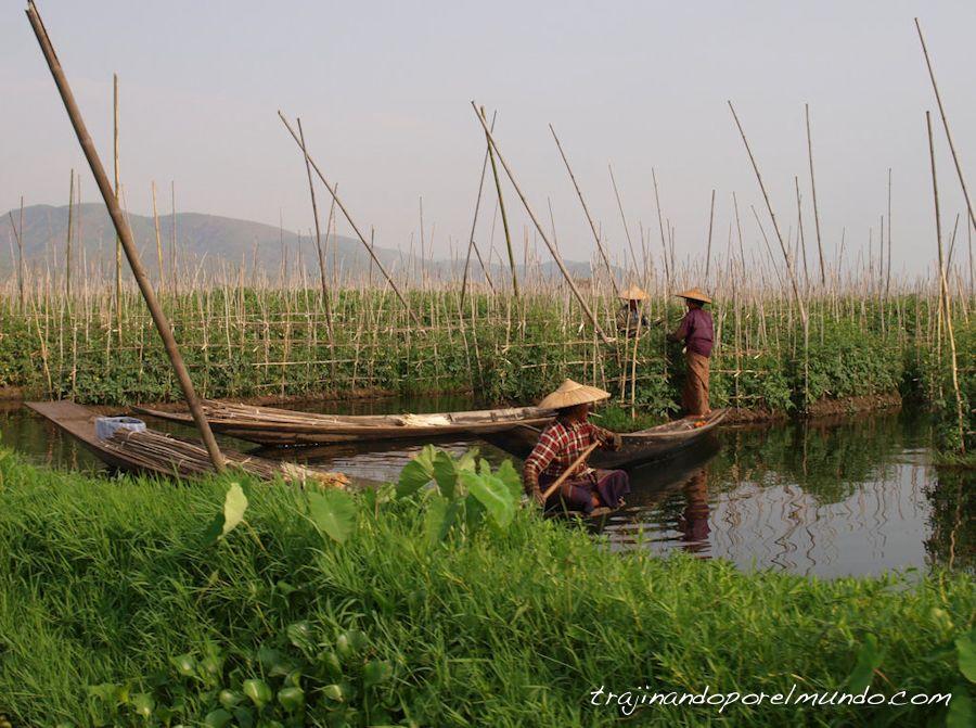 viaje, Birmania, Myanmar, Lago Inle, que ver, huertos flotantes