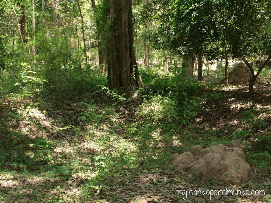 Preah Vihear, camboya, minas antipersona, precaucion