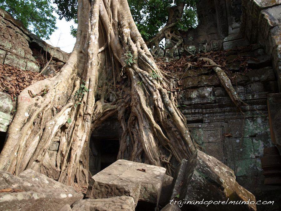 Camboya, viaje, Tomb Raider, Lara Croft, curiosidades, arbol, raiz