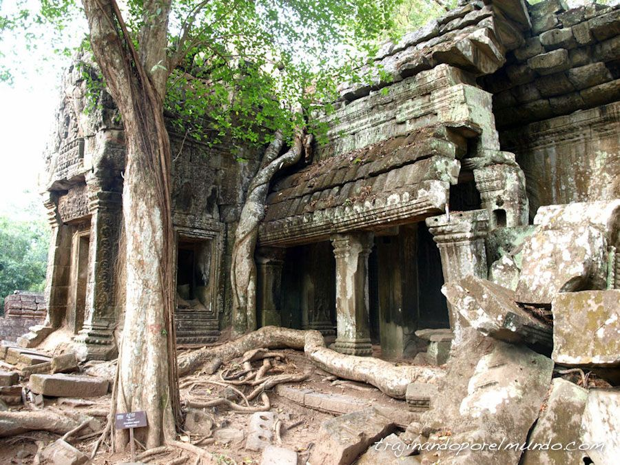 Angkor, lara croft, templo videojuego, arboles