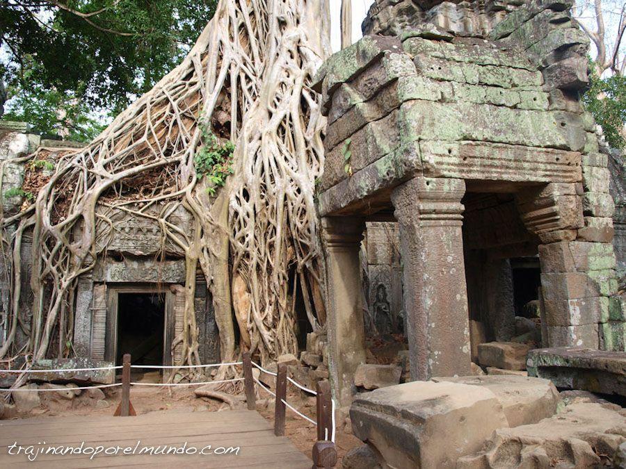 Lara Croft, tomb raider, camboya, templos, arbol, raices