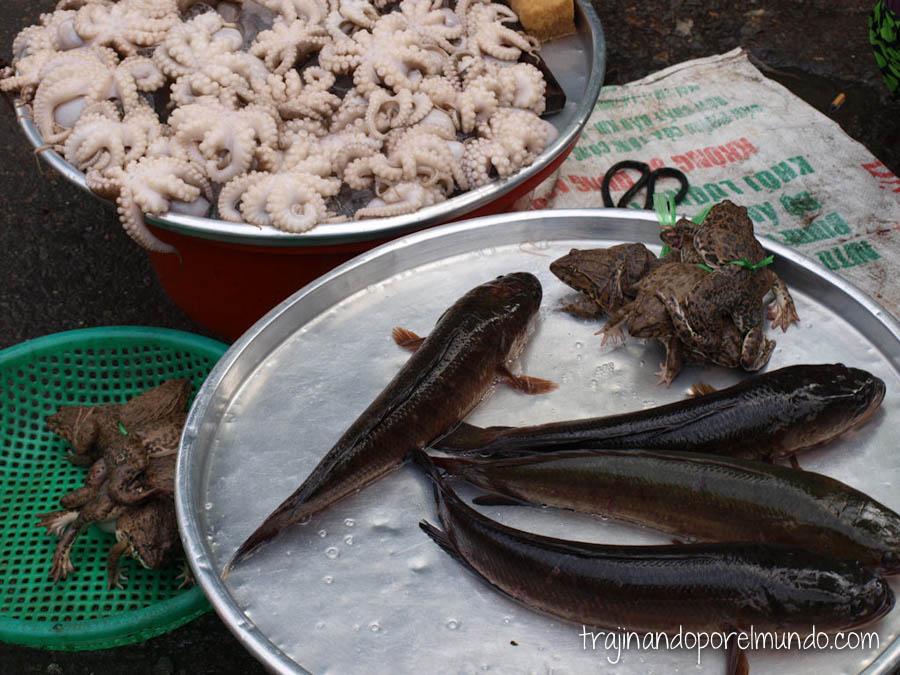 vietnam, asia, pescado vivo, mercado, comida, barato