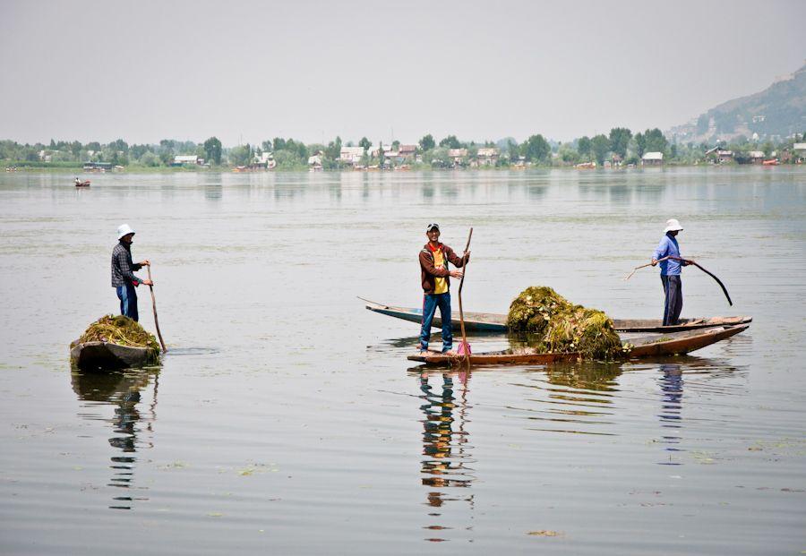 lago-dal-srinagar-trabajadores