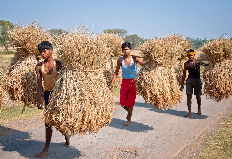 Chhattisgarh, India, Bastar, Jagdalpur, adivasi