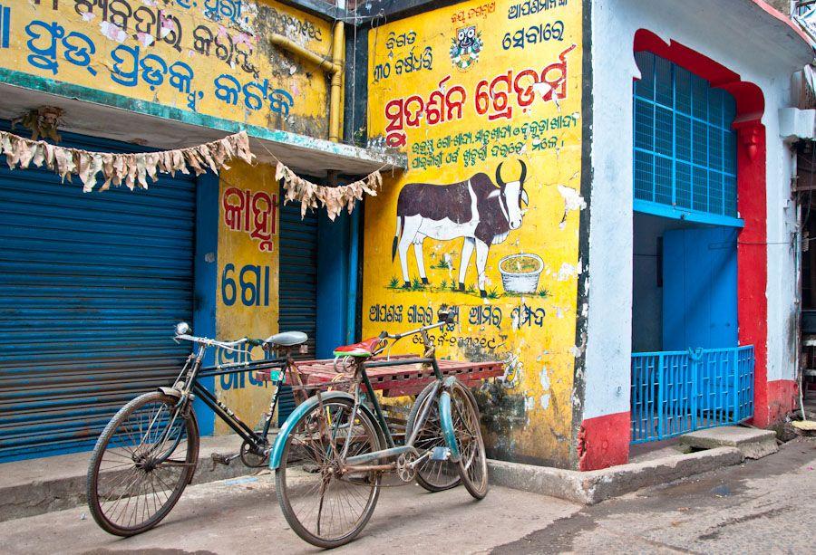 India, vacas, Orissa, bicicletas