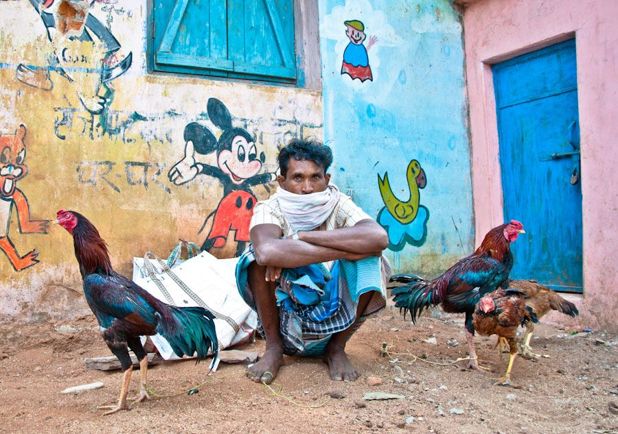 adivasi, India, tribus, gallos, pelea, Bastar, Jagdalpur