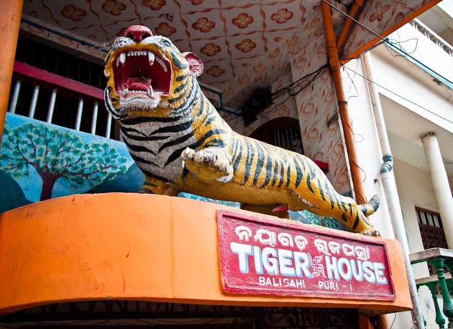 curiosidades, India, Orissa, tigres, playa, selva