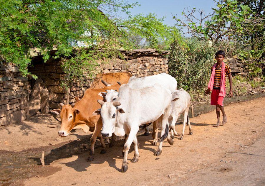 aldea, Chhattisgarh, bastar, India, tribus