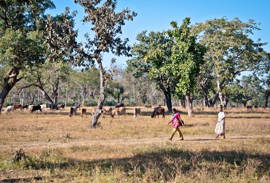viaje, india, naturaleza, rural, pueblo, bosque