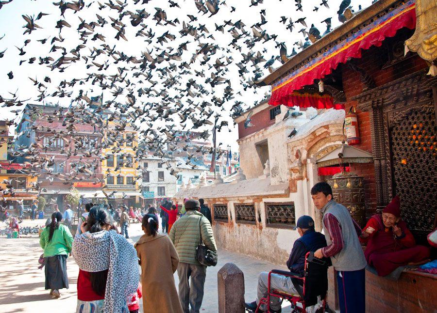 Kathmandu, que ver, estupa, Bodnath, palomas
