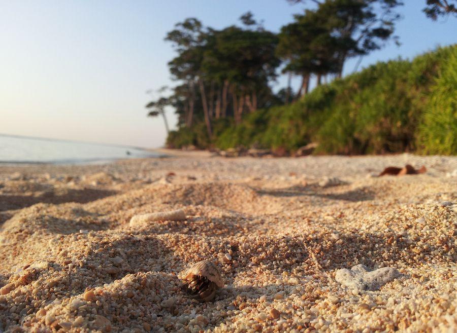viaje, india, cangrejo, playa, andaman