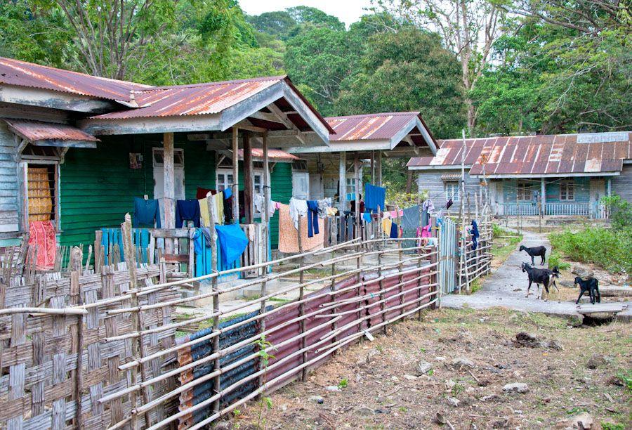 India, Andaman, islas, cabras, que ver,