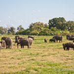 Sigiriya y Kaudulla (un día perfecto en Sri Lanka)