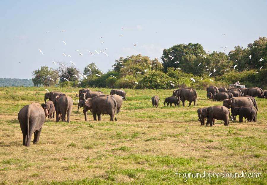 Safari en Parque Nacional de Sri Lanka