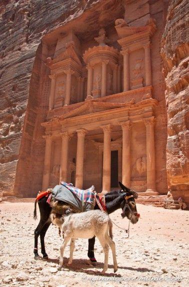 Jordania, animales, explotacion, burros