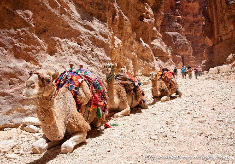 viaje, jordania, que ver, que hacer, turistas