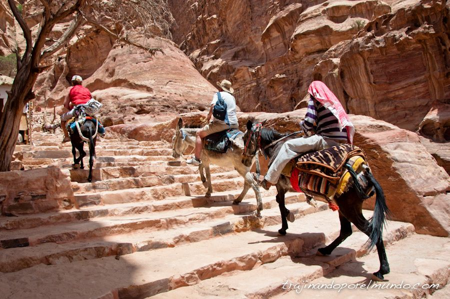 Petra, Jordania, burros, animales, explotacion, turistas