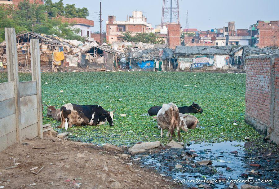 India, pobreza, slum, miseria, basura
