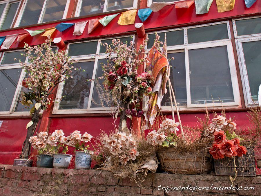 China, flores, tibet, budismo,