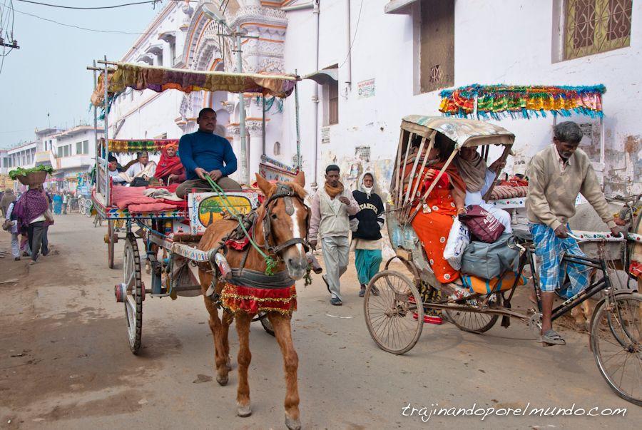viaje a india, carro de caballos, india, tonga, rajgir, bihar