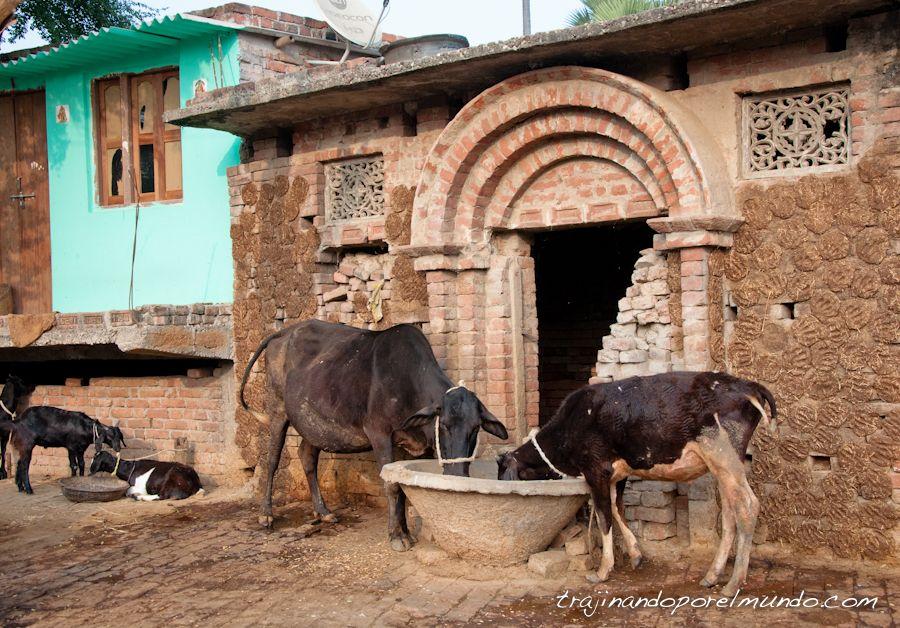 que ver en bihar, que ver en rajgir, pueblos, india