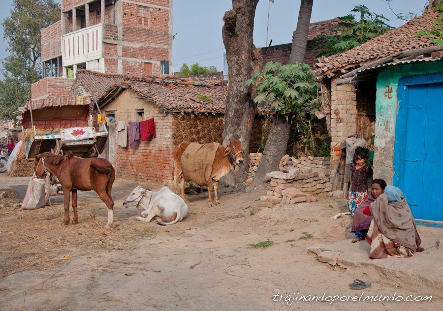 que ver en bihar, rajgor, pueblos, india, animales