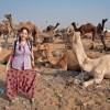 Rodeada-de-camellos-en-Pushkar
