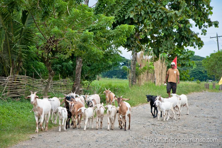 Pastor de cabras en la cárcel de Iwahig, Filipinas