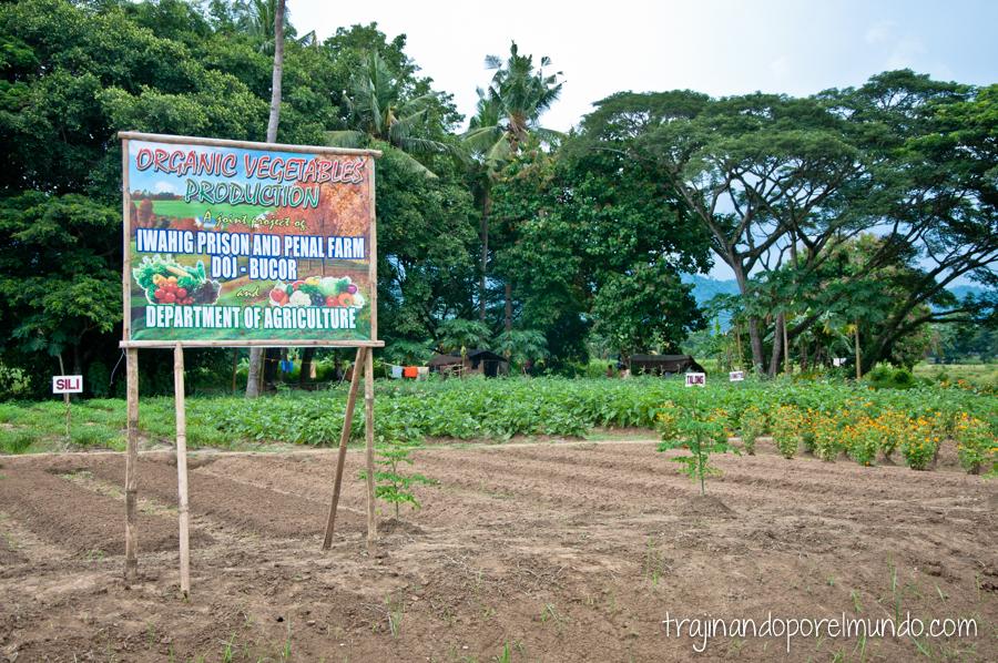 Granja y plantaciones en la cárcel de Iwahig, Filipinas