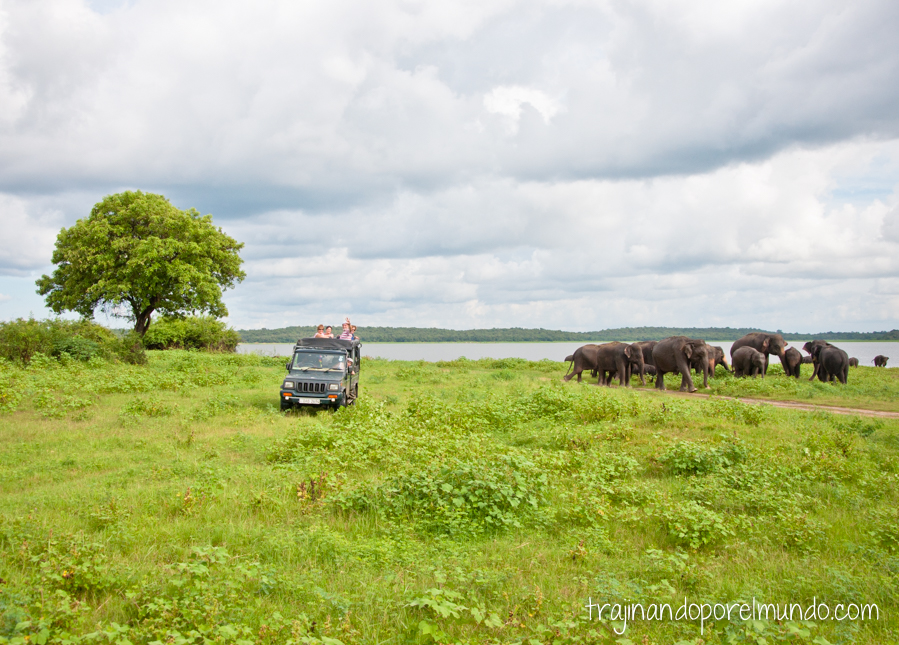 Imprescindible en tu viaje en Sri Lanka