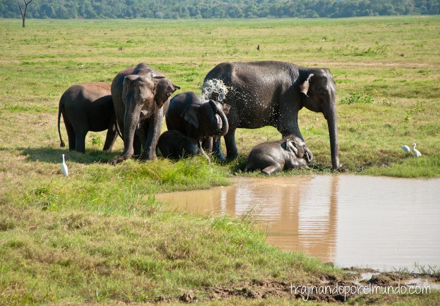 Ver animales en libertad en Sri Lanka