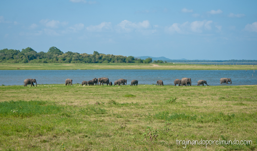 Parque Nacional de Kaudulla, Sri Lanka