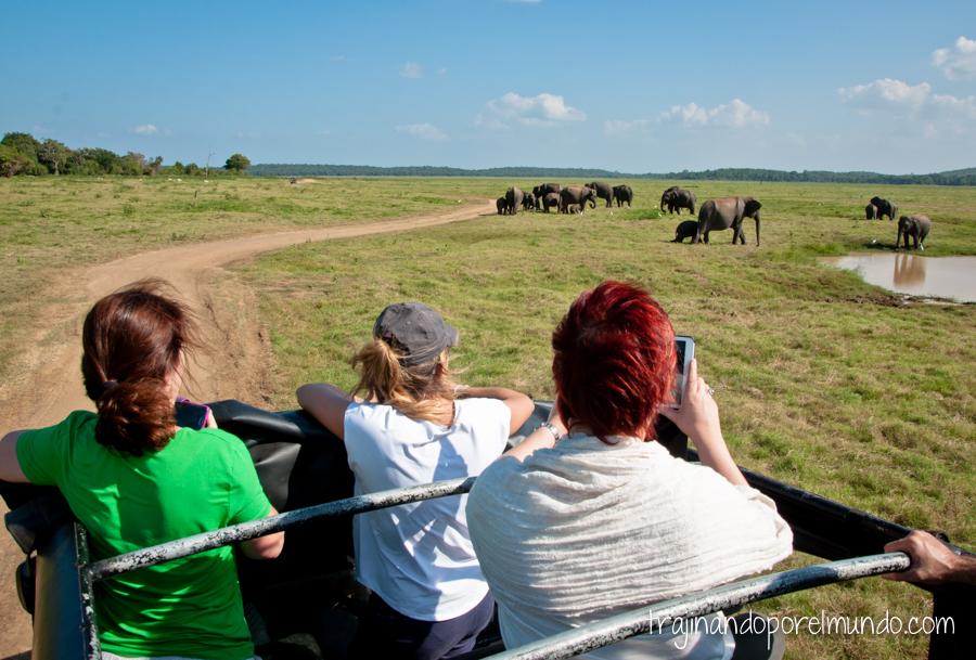 Safari para ver elefantes en Sri Lanka