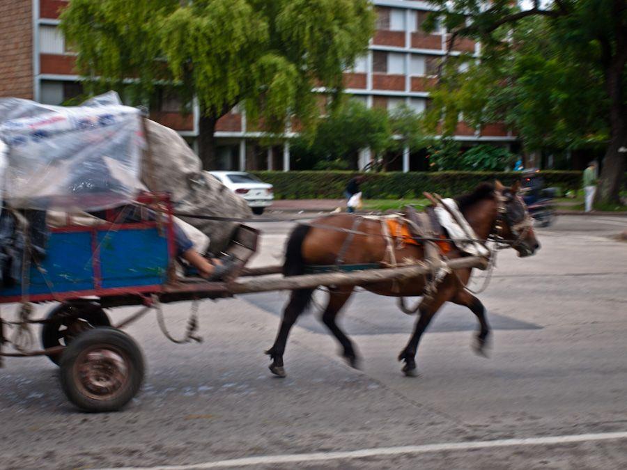 uruguay, montevideo, basura, caballos